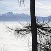 Tree And Fog Art Print