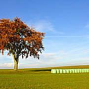 Tree And Hay Bales Art Print