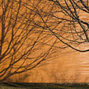 Tree And Shadow At Cogswells Grant Art Print