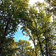 Tree Arches At Clackamette Park Art Print