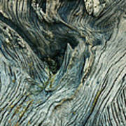 Tree Art Art Print