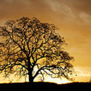 Tree At Golden Sunrise Art Print