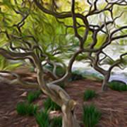 Tree At Norfolk Botanical Garden Art Print