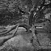 tree at Normanby Park Art Print