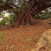 Tree At Royal Botanic Garden Art Print