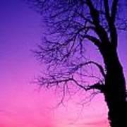 Tree At Sunrise Art Print
