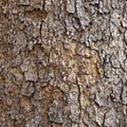 Tree Bark Background Texture Art Print