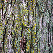 Tree Bark Detail Study Art Print by Design Turnpike
