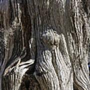 Tree Bark No. 3 Art Print