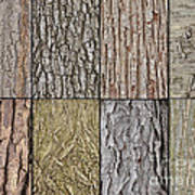 Tree Bark Art Print
