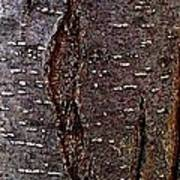 Tree Bark To The Left Art Print