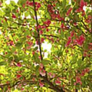 Tree Blossom 1 Art Print
