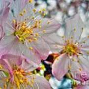 Tree Blossom Art Print