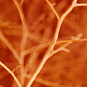Tree Branches Abstract Orange Art Print