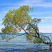 Tree Art Print by Charline Xia