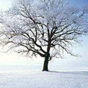 Tree Covered In Hoar Frost Art Print