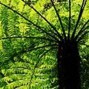 Tree Fern Art Print