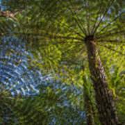 Tree Ferns From Below Art Print