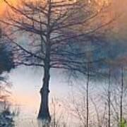 Tree Fog Sunrise Art Print