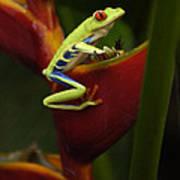 Tree Frog 3 Art Print by Bob Christopher