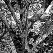 Tree Giant Art Print