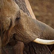 Tree Hugging Elephant Art Print