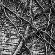 Tree Hugging Art Print