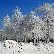 Tree Ice Art Print