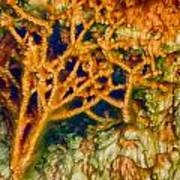 Tree In A Park Hot Springs Art Print