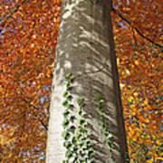 Tree In Autumn Art Print