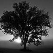 Tree In Black And White Art Print