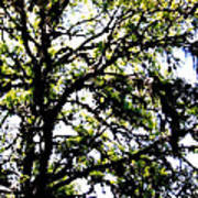 Tree In Blue Ridge Mountains Art Print