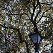 Tree In French Quarter Art Print