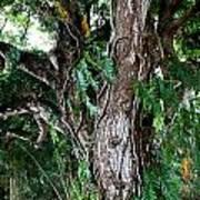 Tree In Kauai Art Print