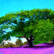 Tree In Lavender Art Print