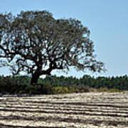 Tree In Plowed Field Art Print