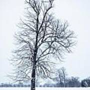 Tree In Snow Art Print