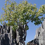 Tree In The Tsingy De Bemaraha Madagascar Art Print