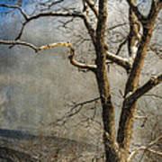 Tree In Winter Art Print by Lois Bryan