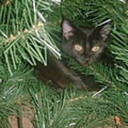 Tree Kitten Art Print
