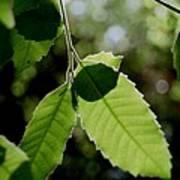 Tree Leaves Art Print