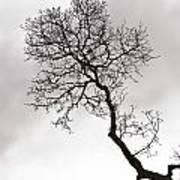 Tree Limb Art Print