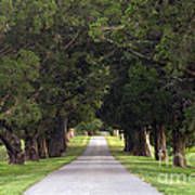 Tree Lined Drive - D008564 Art Print