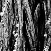 Tree Lines Art Print