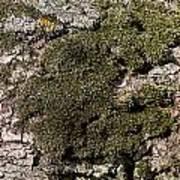 Tree Moss Art Print