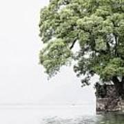 Tree Next To A Lake Art Print