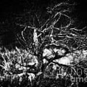 Tree Of Darkness Art Print