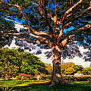 Tree Of Joy. Mauritius Art Print