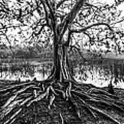 Tree Of Life Art Print