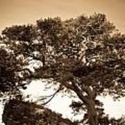 Tree Of Life In Sepia Art Print